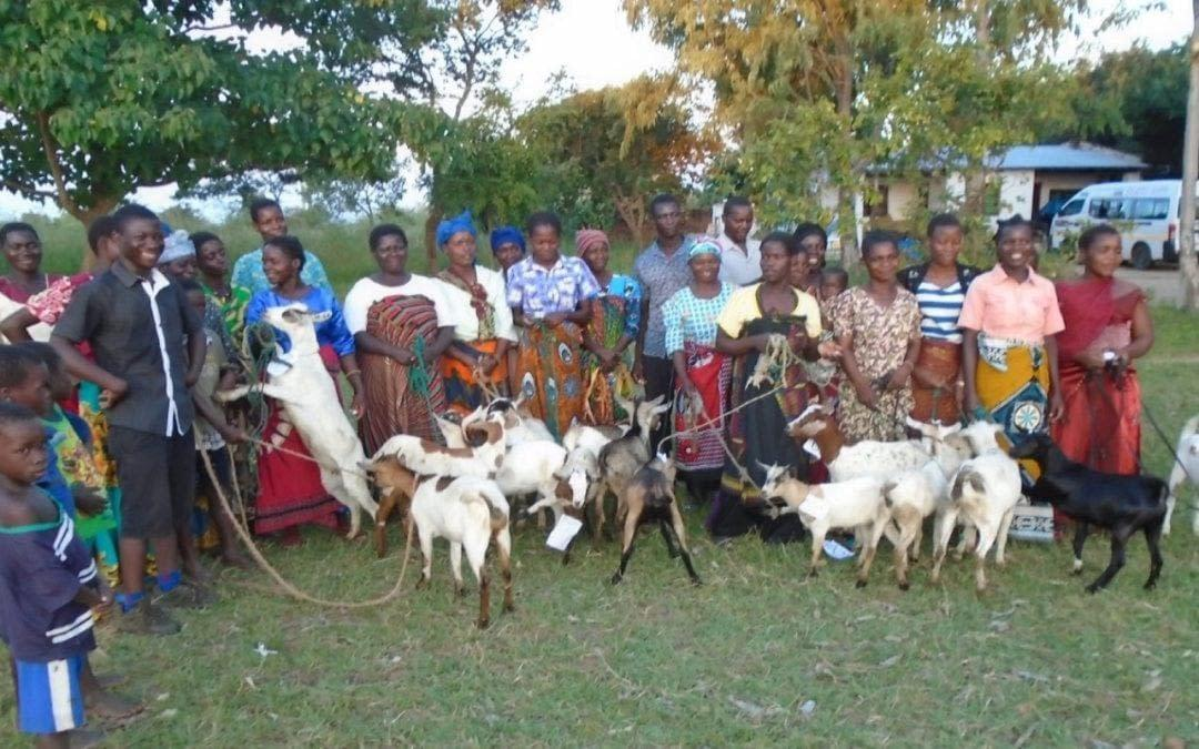 Goats Changing Lives