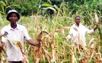 Harvest During Hunger Season?